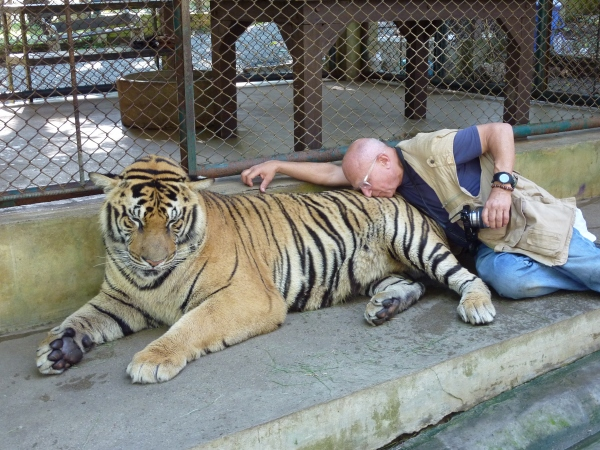Stephen Posen tempts a tiger in Thailand